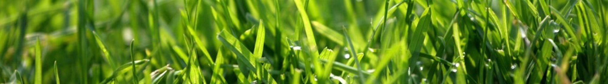 healthy-lawn-banner
